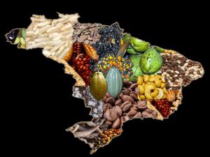 Mapa alegórico dos produtos agrícolas brasileiros.